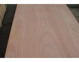 Hardwood Ply Neatline® Poplar Core B/C 4/6/9/12/15/18/25/30MM 2400X1200.